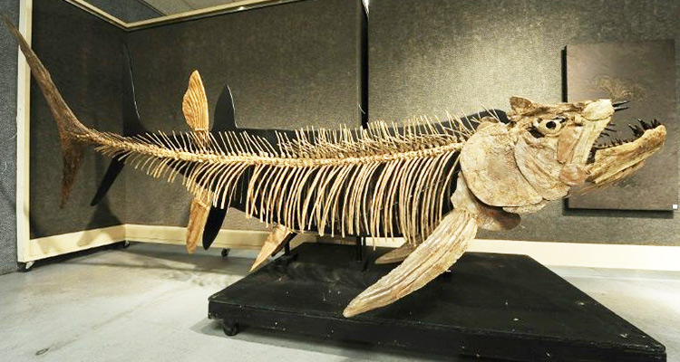 A 70 million-year-old fossil of a giant predator fish has ...