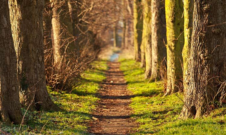 Nature advances as humans retreat - GulfToday