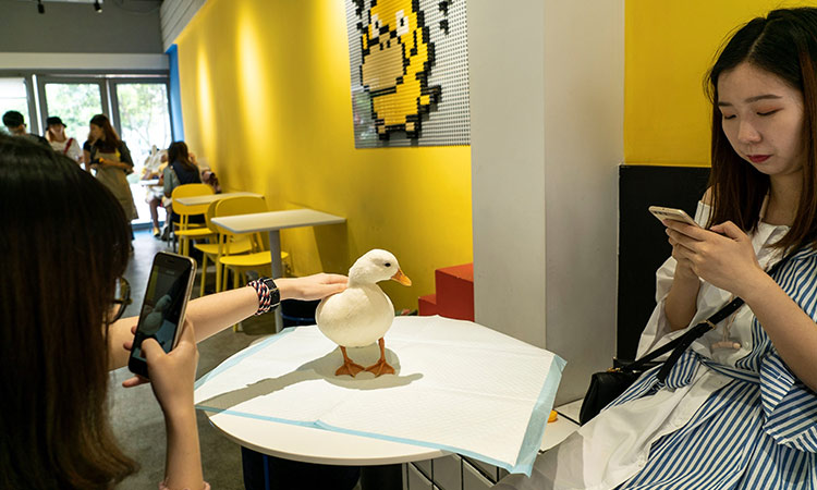 Duck cafe 1