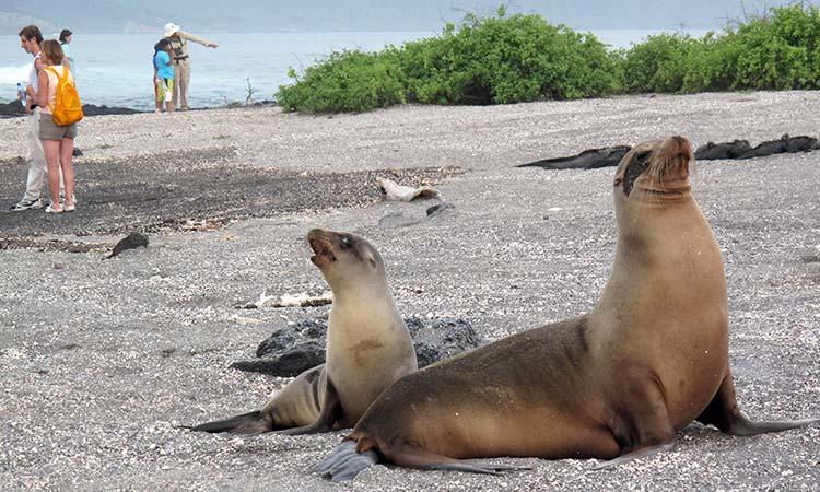 Galapagos Islands  3