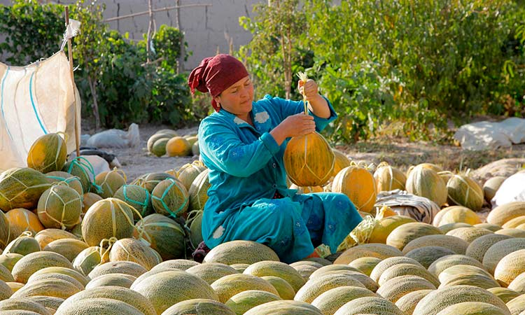 Uzbek farmer hopes the sweetest melon will bring good ...