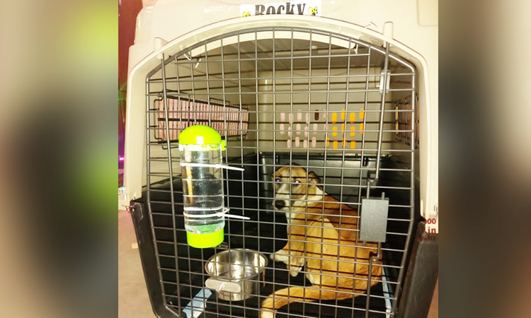 A badly injured Indian street dog finds a new home in the English countryside - GulfToday