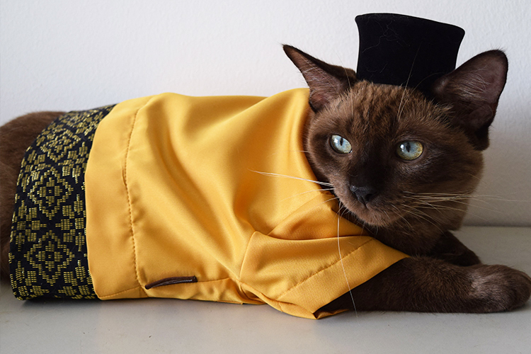 Malaysians give their pets a fashion uplift, gear up for Eid al-Fitr