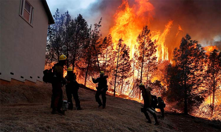 Douse Amazon Forest Fires Before It S Too Late Gulftoday