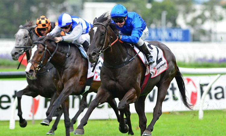 In-form Avilius bids for fourth  G1 glory at Caulfield Stakes