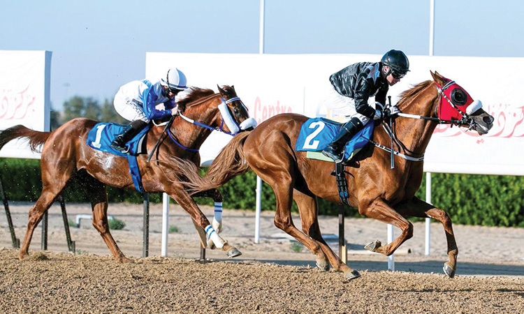 Oertel-trained AF Alwajel favourite  for GCC Cup at Sharjah Racecourse